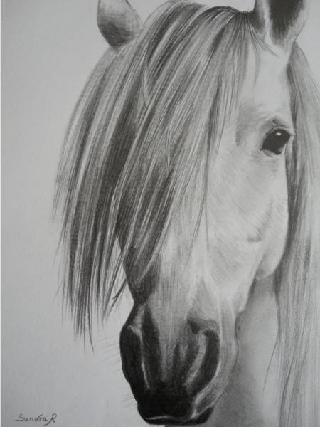 Dessine moi un animal familier - Dessin de chevaux sauvage ...