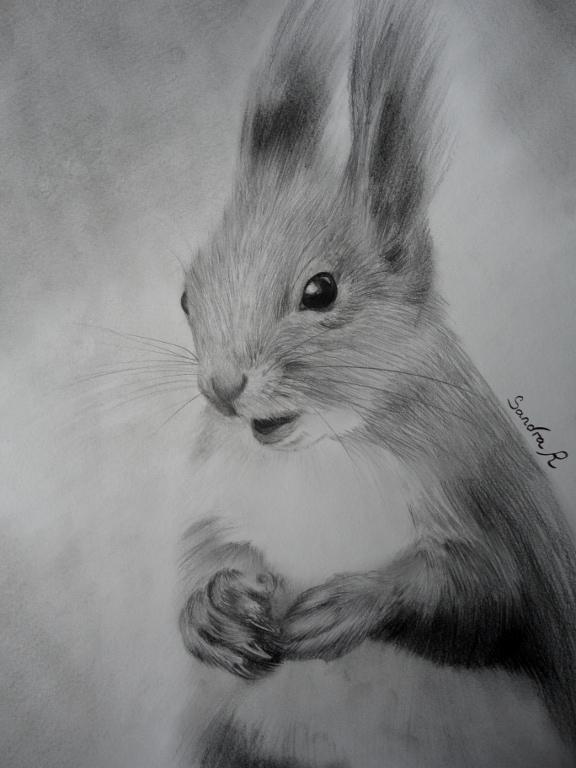 Dessine moi un animal sauvage - Ecureuil a dessiner ...