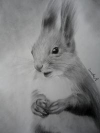 Ecureuil / squirrel - crayon graphite