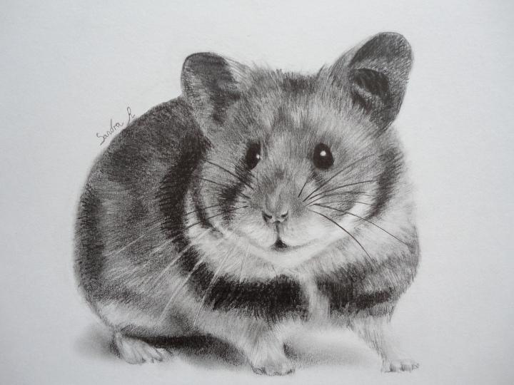 Dessine moi un animal familier - Hamster gratuit ...