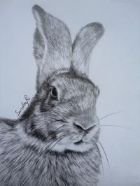 Portrait lapin / rabbit drawing