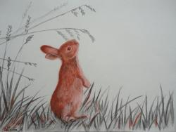 Lapin curieux - crayon graphite