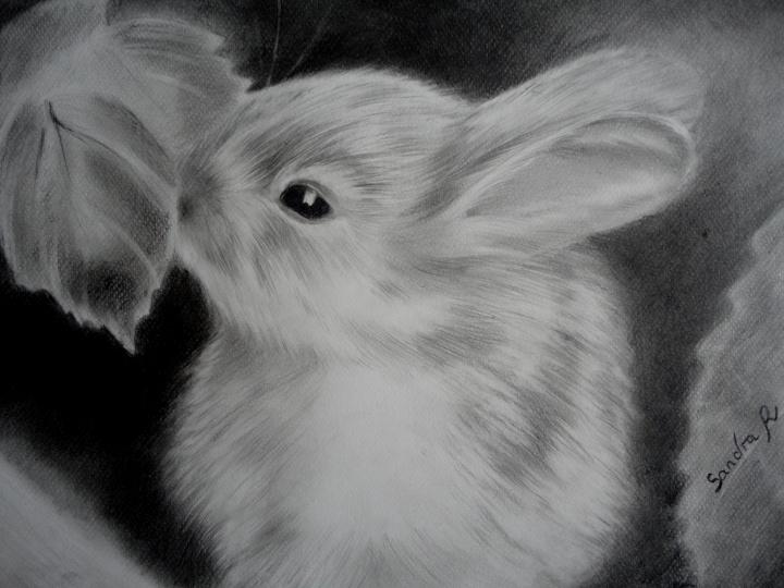 Dessine moi un animal familier - Animal a dessiner ...