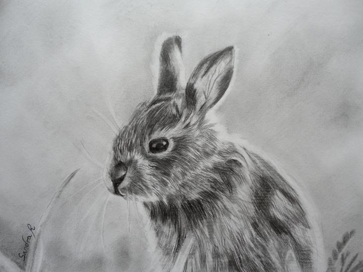 Dessine moi un lapin - Lapin a dessiner ...