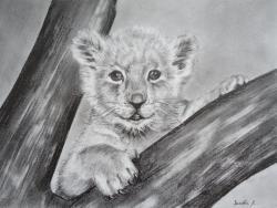 lionceau - crayon graphite