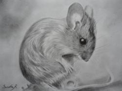 mulot - crayon graphite